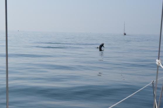 Dolphins off Cadiz
